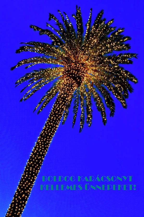 christmas-palm-tree-and-moon-garry-gay.jpg